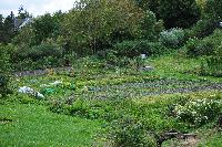 les pros du jardin
